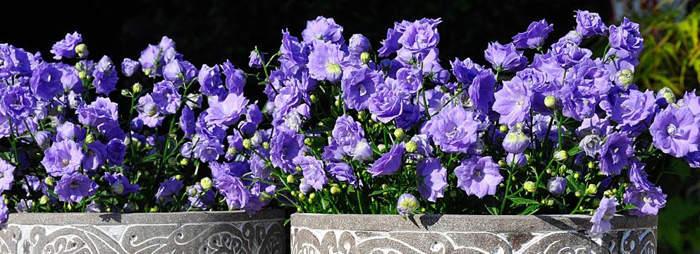 Spunti decorativi per balcone e terrazza - Qui potrete conoscere i fiori