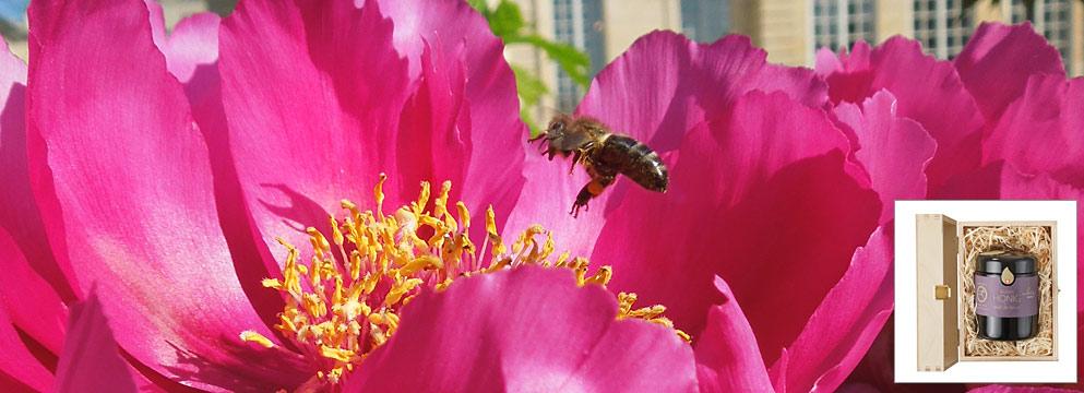 Blumen und Honig - eine Kombination für Leckermäuler