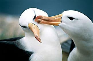 L'Amore per gli ANIMALI - Pagina 2 Albatross