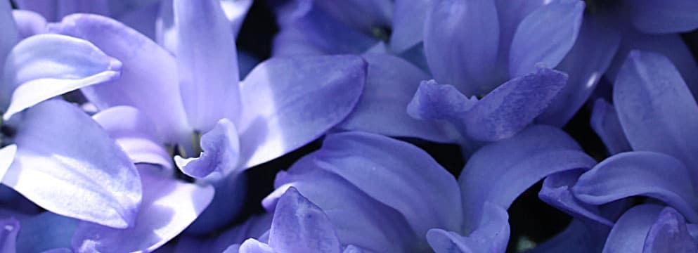 Betörend & sexy – duftende Frühlingsblüher - Hier erfahren Sie alles ...