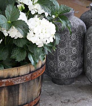 Hortensien, Lavendel & mehr - Hier erfahren Sie alles über Blumen