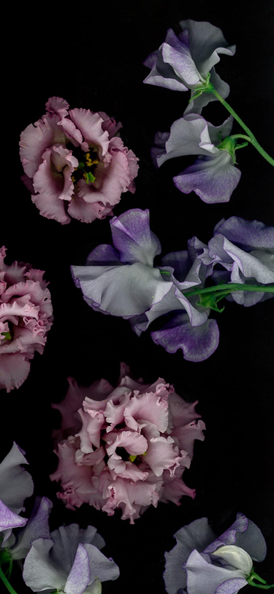 Wallpapers Ici Vous Apprenez Tout Des Fleurs