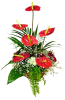 Media 1 - Arrangement of Anthurium