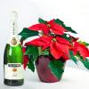 Media 1 - Weihnachtsstern mit Martini Asti (Sekt)