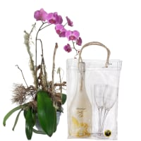 Natural Elegance with WHITE Secco Cool Bag (75cl) and 2 Champagne Glasses