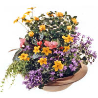 Outdoor Flower Planter (early summer)
