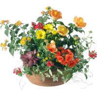 Fröhliches Arrangement (gepflanzt)