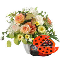 Good Luck Wishes with chocolate ladybird