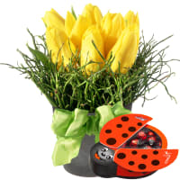 Spring-Hit (arrangement) with chocolate ladybird