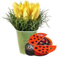 Frühlings-Hit (gesteckt) mit Schoggi-Glückskäfer