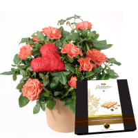 """Herzliche Überraschung (Rosenpflanze mit Herz) mit Gottlieber Hüppen """"Special Edition for Fleurop"""""""