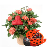 Heartfelt Surprise (Rose plant with Heart) with Chocolate Ladybird