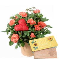 "Heartfelt Surprise (rose plant and heart) with bar of chocolate ""Hello Sunshine"""