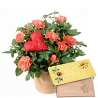 Passion et surprise (rosier et cœur) avec tablette de chocolat «Hello Sunshine»