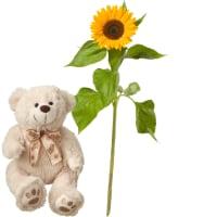 Es chlises Sünneli (1 Sonnenblume) mit Teddybär (weiss)