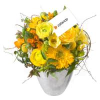 Little Sunshine mit Zalando-Geschenkkarte CHF 25.-