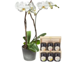 White Orchid (Phalaenopsis) in Cachepot with honey gift set