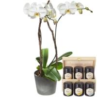 Weisse Orchidee (Phalaenopsis) im Cachepot mit Honig Geschenk-Set