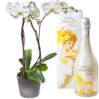 Fin et inoubliable… avec WHITE Secco (75cl)
