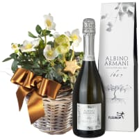 Splendid Christmas Roses in a Basket (planted) with Prosecco Albino Armani DOC (75cl)