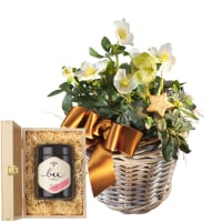 Splendid Christmas Roses in a Basket (planted) with Swiss blossom honey