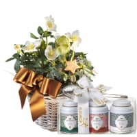 Splendid Christmas Roses in a Basket (planted) with Gottlieber tea gift set