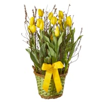 Regalo di primavera in giallo (piantato)