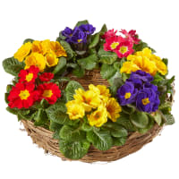Colorful Spring Wreath (planted)