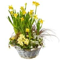 Jardinet de printemps ensoleillé (planté)