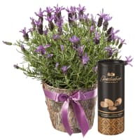 Scented Summer Greeting with Gottlieber cocoa almonds