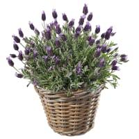 Ein Korb voll Lavendel