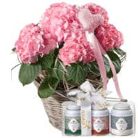 Hortensia (rose) avec cœur et coffret cadeau de thés Gottlieber