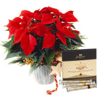 "Poinsettia decorated with Gottlieber Hüppen ""Special Edition for Fleurop"""