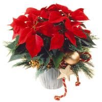 Poinsettia Decorated
