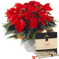 "Poinsettia Decorated, with Gottlieber Hüppen ""Special Edition for Fleurop"""
