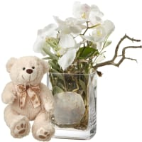 Design orchidea, vaso incluso con orsetto in peluche (bianco)