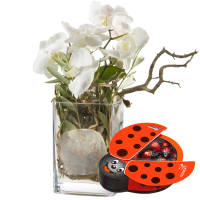 Best of Luck ... with chocolate ladybird