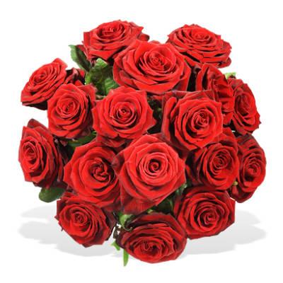 einfach rote rosen hier online bestellen lieferung noch gleichen tag. Black Bedroom Furniture Sets. Home Design Ideas