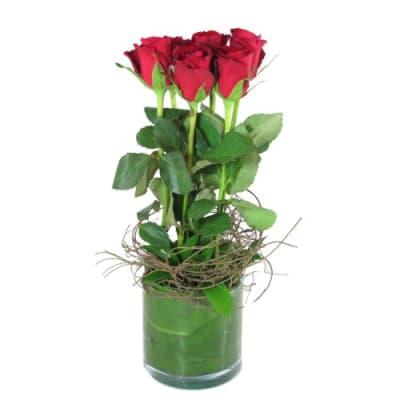 6 rote rosen in vase hier online bestellen lieferung noch gleichen tag. Black Bedroom Furniture Sets. Home Design Ideas