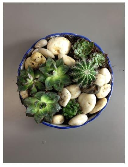Arrangement of Plants Green