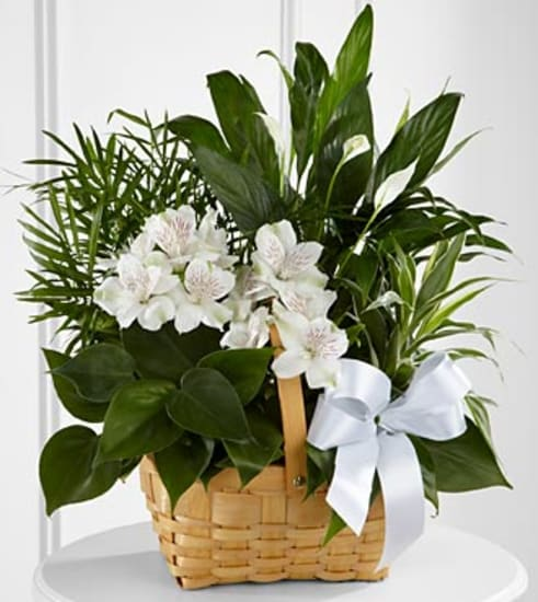 C23-4454 The FTD® Peace & Serenity™ Dishgarden