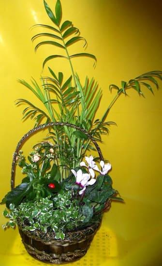 Pflanzenschale