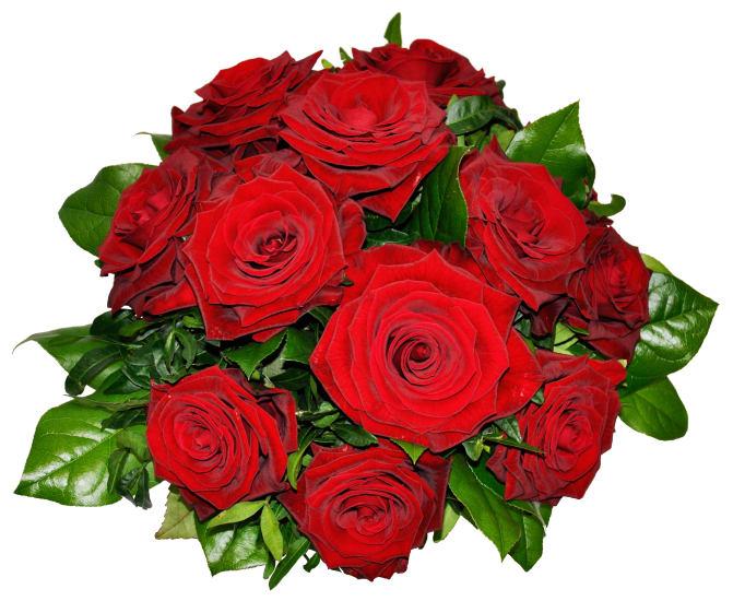 Verlockende 12 Rosen