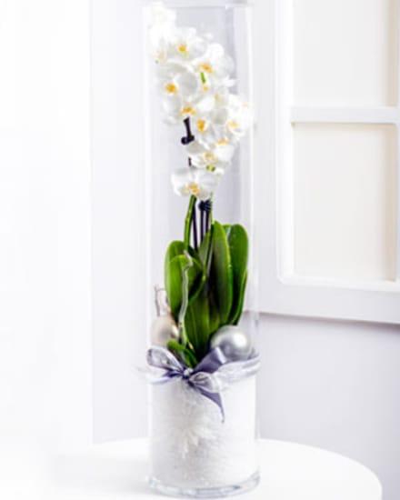 Modern Christmas Arrangement with Phalaenopsis
