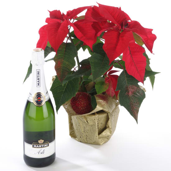 Weihnachtsstern mit Martini Asti (Sekt)