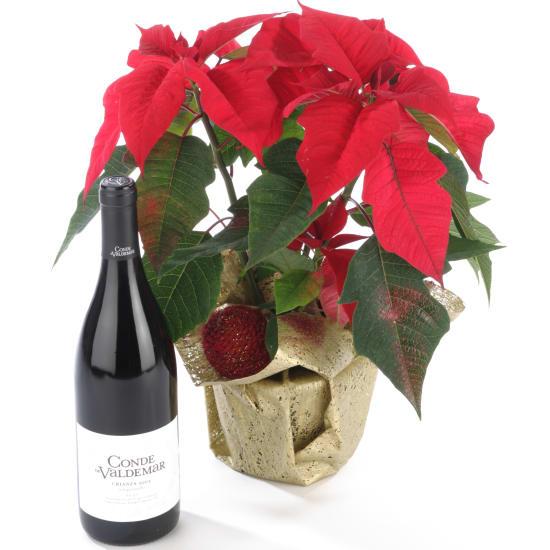 Weihnachtsstern mit Rotwein