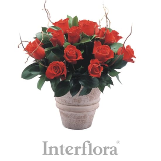 Red roses arrangement (pottery vase included)