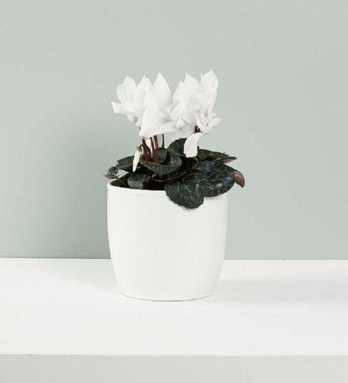 Saison-Pflanzen