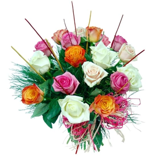 18 colourful roses
