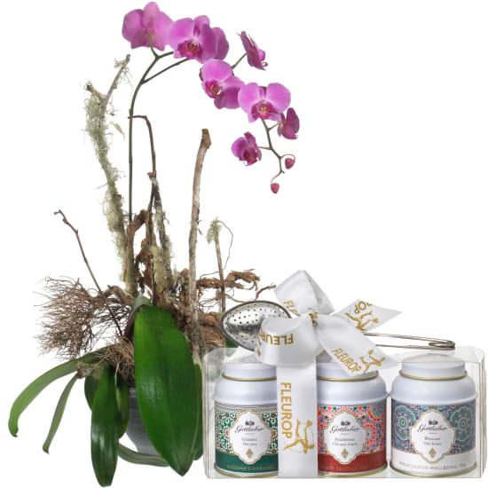Une précieuse orchidée (en pot) avec coffret cadeau de thés Gottlieber